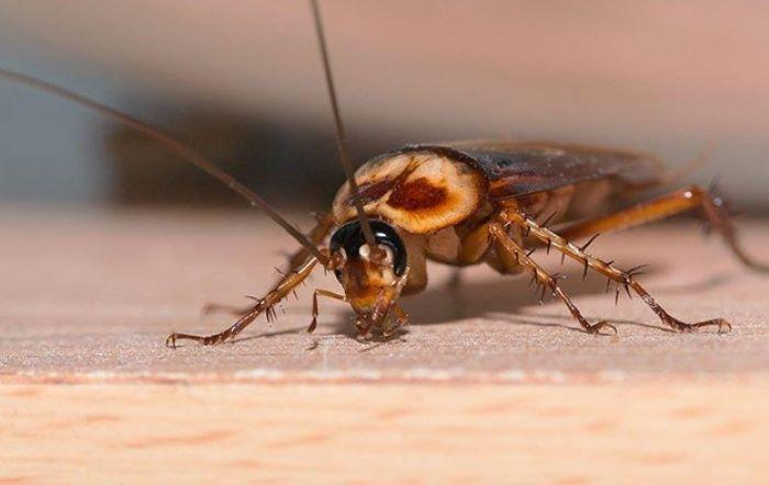 How To Control Pests In Arizona Commercial Properties